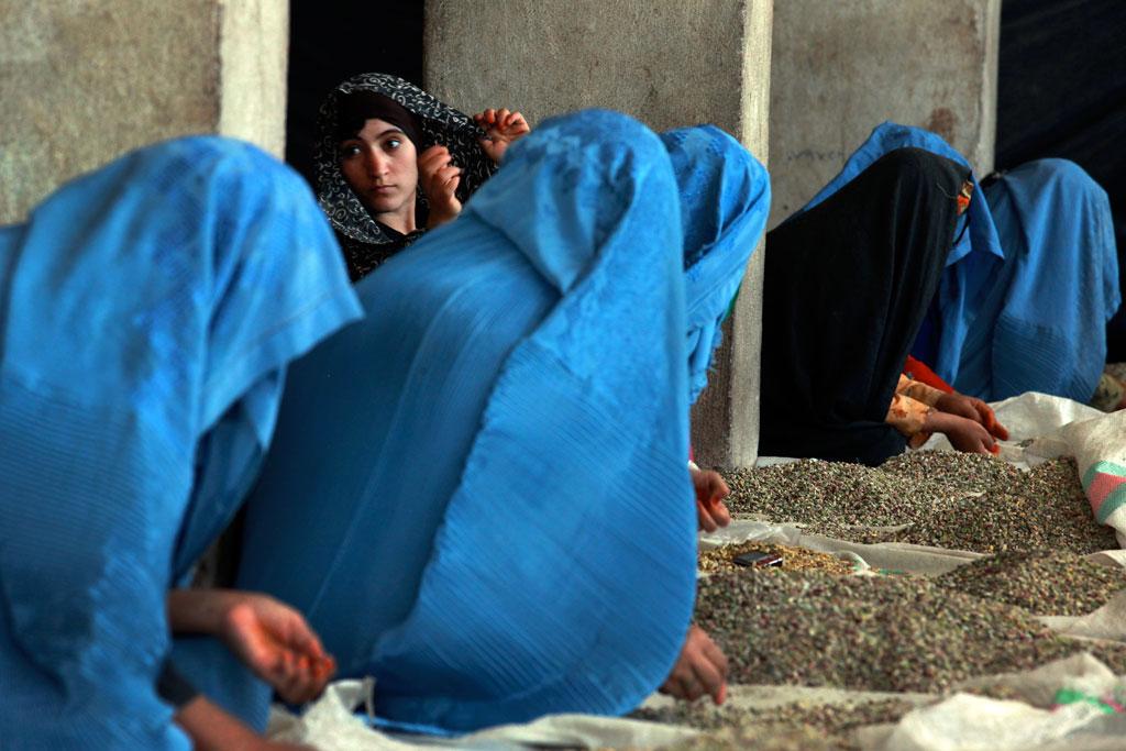 Тридцать лет борьбы нанесли тяжелый урон по афганской экономике. На фото женщины сортируют фисташки вручную на частном заводе в Герат, июнь 2012 года. Фото ООН